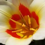 blossom-821210_1920.th.jpg
