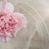 carnation-1322492_1280.th.jpg