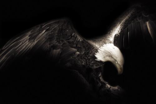 eagle-1260079_1920.md.jpg