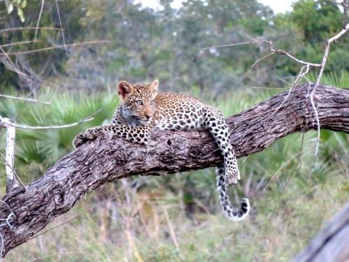 leopard-1021486_1280.md.jpg