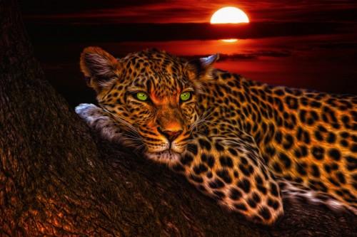 leopard-1230855_1920.md.jpg