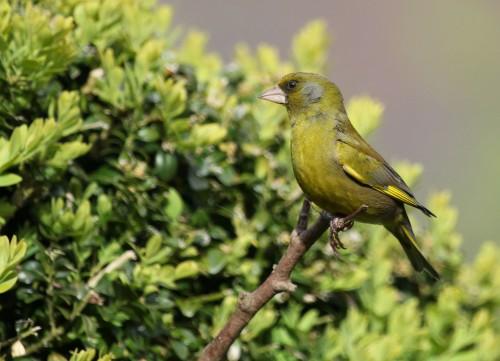 bird-113496_1920.md.jpg