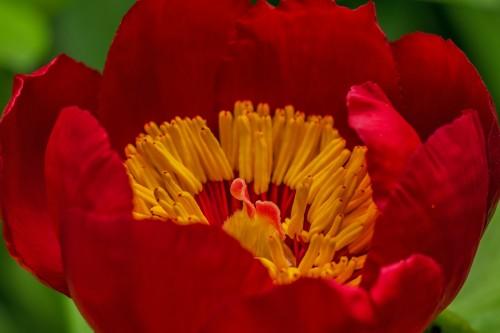 flower-142083_1920.md.jpg