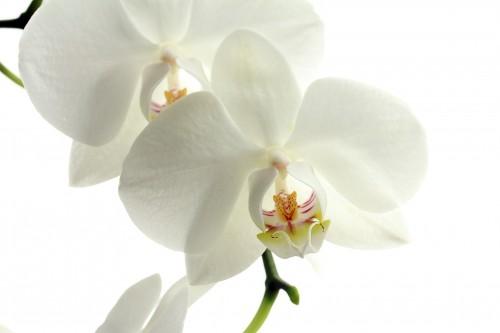 flower-179004_1920.md.jpg