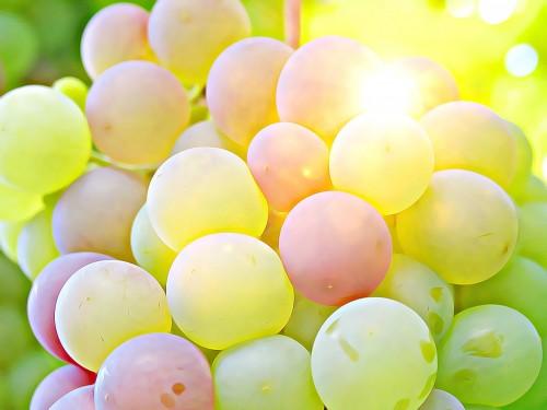 grape-2002848_1920.md.jpg