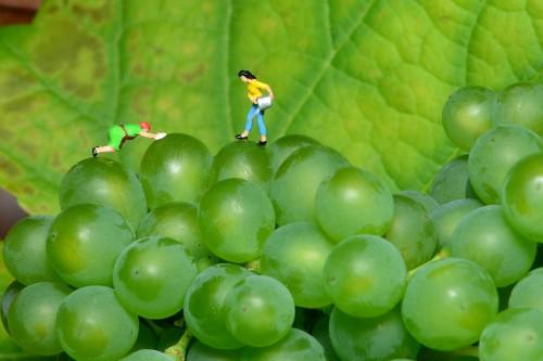 grapes-1652194_1920.md.jpg