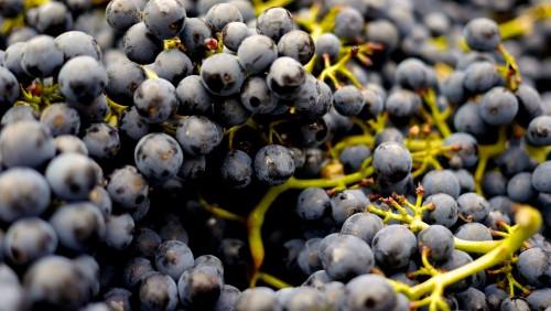 grapes-2104075_1920.md.jpg