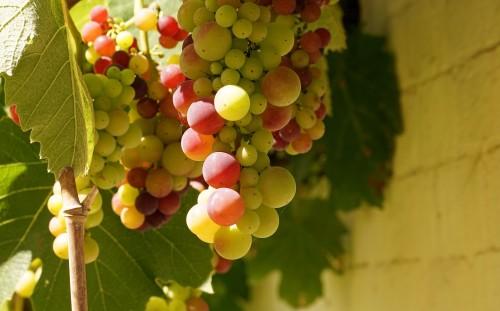 grapes-2151586_1920.md.jpg
