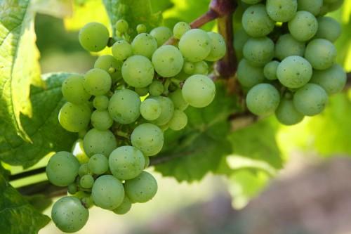 grapes-439300_1920.md.jpg
