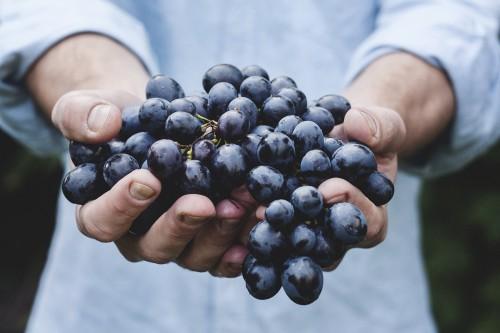 grapes-690230_1920.md.jpg