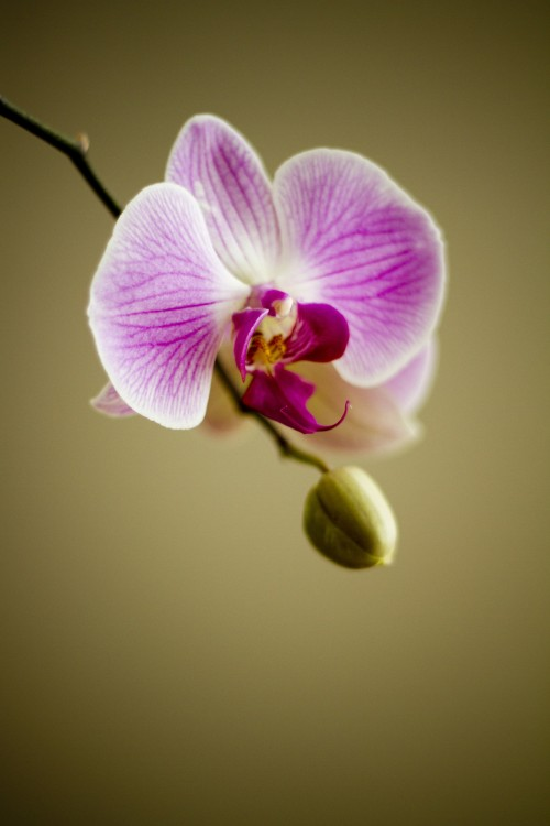 orchid-22159_1920.md.jpg