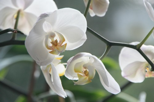 orchid-4780_1920.md.jpg