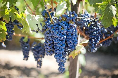 purple-grapes-553464_1920.md.jpg
