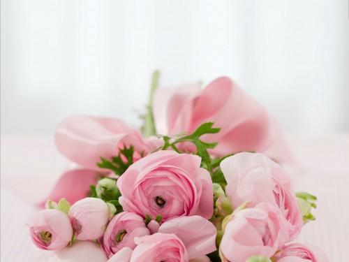 roses-142876_1920.md.jpg