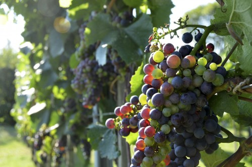 wine-2151776_1920.md.jpg