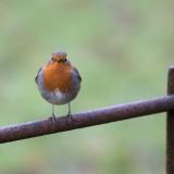 bird-1218677_1920.th.jpg