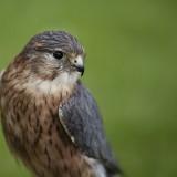 bird-1273739_1920.th.jpg