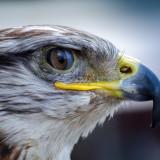 bird-197052_1920.th.jpg