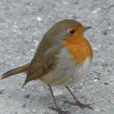 bird-93598_1920.th.jpg
