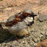 bird-946496_1920.th.jpg