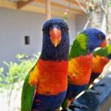 birds-1005961_1920.th.jpg