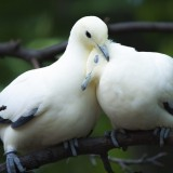 http---1mwallpaper.com-wp-content-uploads-L-Love-1-Birds-Pigeon-Love-Mood-Wallpaper-1024x768.th.jpg