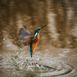 kingfisher-1068684_1920.th.jpg
