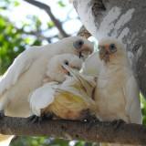 parrots-1208740_1920.th.jpg