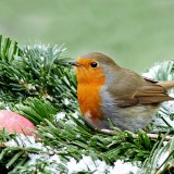 robin-1149855_1920.th.jpg