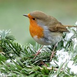 robin-1149866_1920.th.jpg