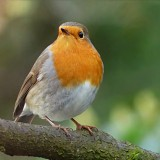 robin-1149874_1280.th.jpg