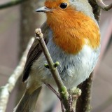 robin-534826_1280.th.jpg