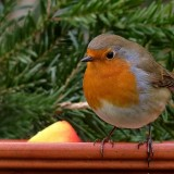 robin-634413_1280.th.jpg
