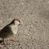 sparrow-204399_1920.th.jpg