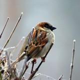 sparrow-50346_1920.th.jpg