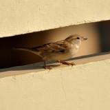 sparrow-73307_1280.th.jpg
