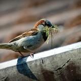 sparrow-827374_1920.th.jpg
