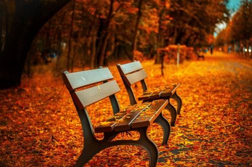 bench-560435_1920.md.jpg