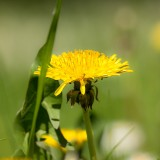 dandelion-1378488_1920.th.jpg