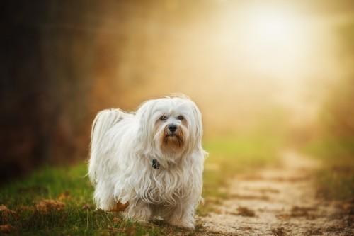 dog-1134492_1920.md.jpg