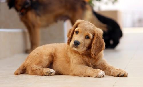 dog-785193_1280.md.jpg