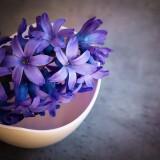 hyacinth-1403653_1920.th.jpg