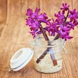 hyacinth-747131_1920.th.jpg