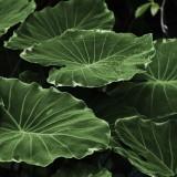 leaf-318743_1920.th.jpg