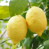 lemon-1117568_1920.th.jpg
