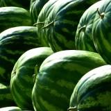 melons-197025_1920.th.jpg