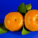 orange-213548_1920.th.jpg