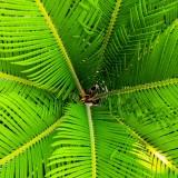 palm-200965_1920.th.jpg