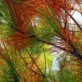 pine-65769_1920.th.jpg
