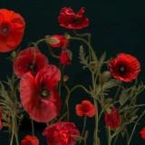 poppy-1442782_1920.th.jpg